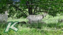 Turbomax high energy Netz für Schafe  90cm hoch mit Doppelspitze